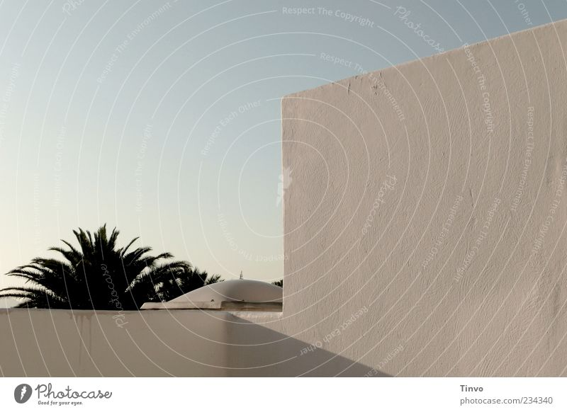 Sky White Plant Summer Wall (building) Wall (barrier) Facade Roof Beautiful weather Palm tree Exotic Terrace Cloudless sky Mediterranean Canaries Lanzarote