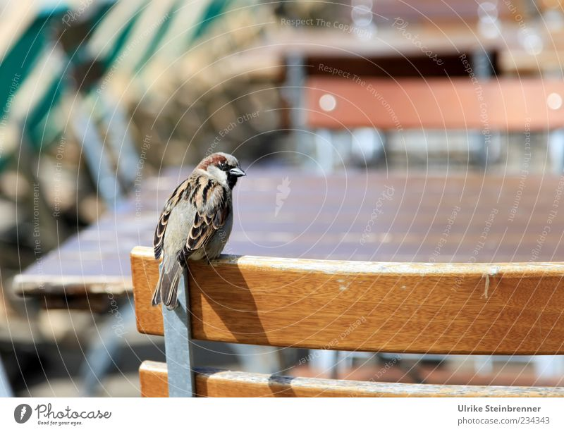 Animal Spring Funny Bird Wait Sit Wild animal Exceptional Chair Watchfulness Brash Expectation Crouch Sparrow Placeholder Seating