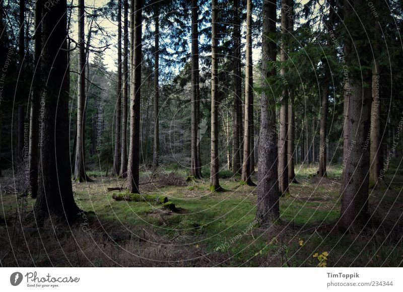 Green Tree Loneliness Forest Environment Dark Germany Tree trunk Woodground Clearing
