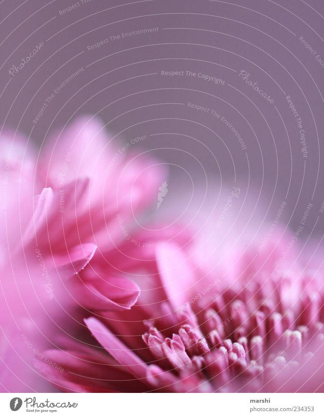 Nature Plant Flower Spring Blossom Pink Violet Partially visible Blossom leave Spring fever Pistil Spring flower Spring colours