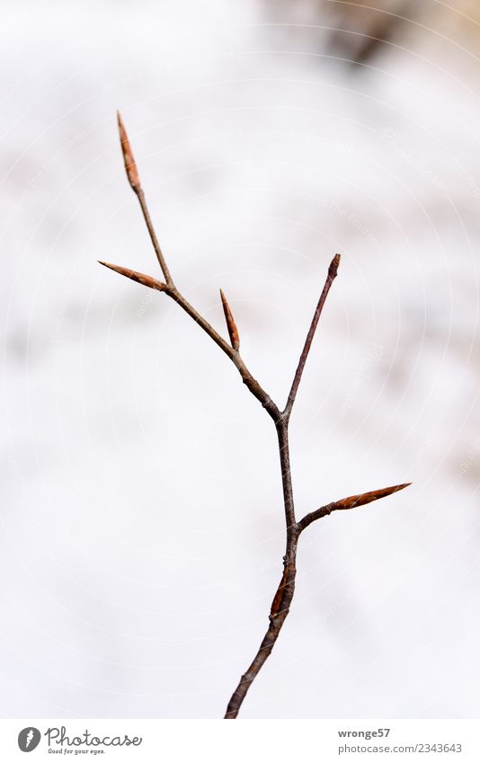 Plant White Forest Spring Brown Park Growth Bushes Delicate Leaf bud Expel