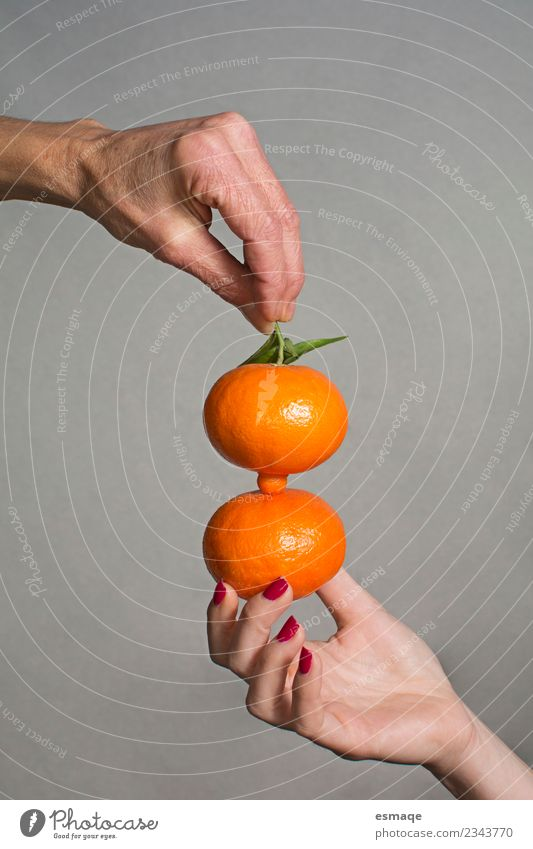 hands holding two oranges on gray background Food Orange Nutrition Eating Breakfast Lunch Buffet Brunch Organic produce Vegetarian diet Diet Slow food Lifestyle