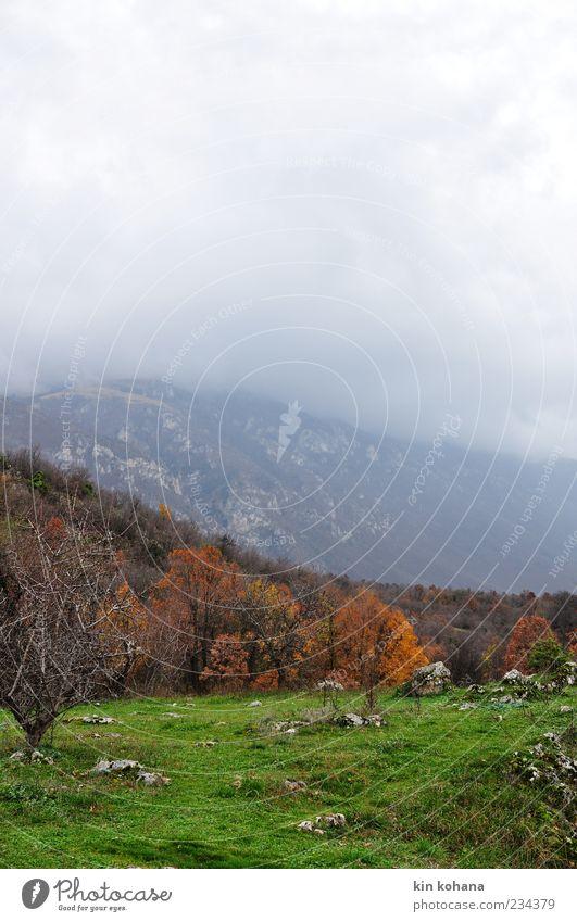 Tree Meadow Landscape Autumn Mountain Sadness Fog Haze Valley Autumnal Storm clouds Autumnal colours Automn wood