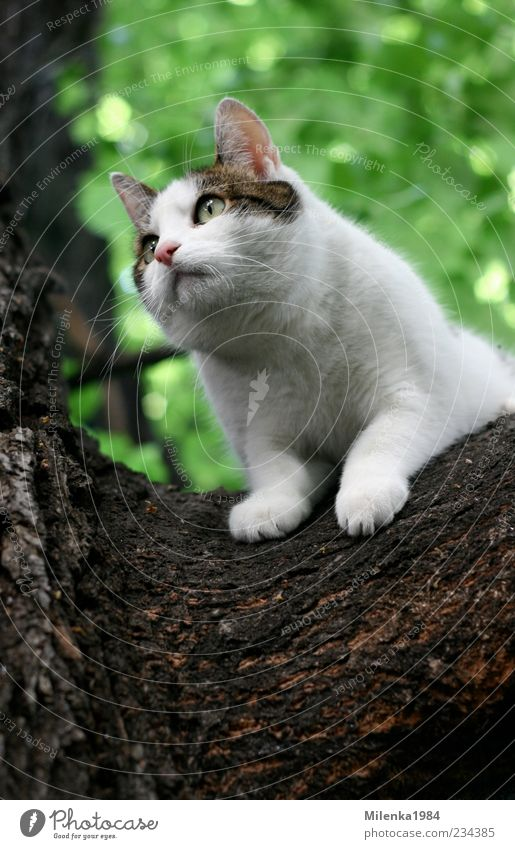 Will down! Nature Tree Animal Pet Cat 1 Curiosity Cute Above White Fear Climbing Looking To hold on Descend Colour photo Exterior shot Copy Space bottom Day