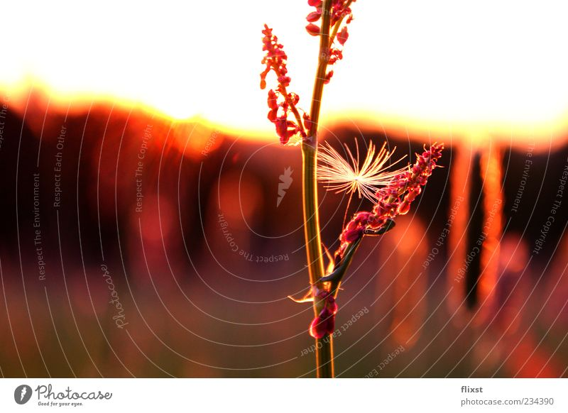 Meadow Grass Spring Blossom Horizon Contentment Romance Beautiful weather Stalk Dusk Pollen Plant Spring fever