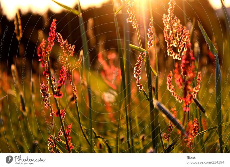 Flower Meadow Grass Contentment Romance Longing Beautiful weather Stalk Optimism Lens flare Spring fever Meadow flower Back-light Plant Grass blossom
