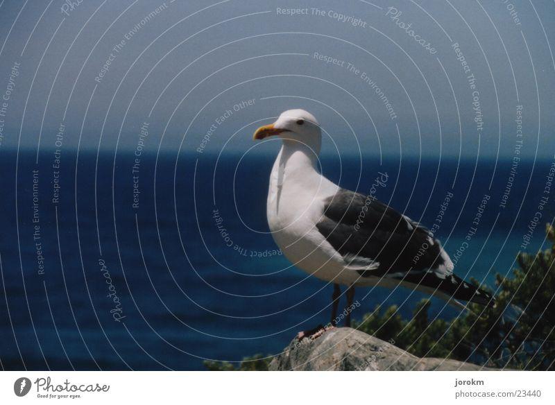 Water Blue Summer Stone Air Bird Seagull