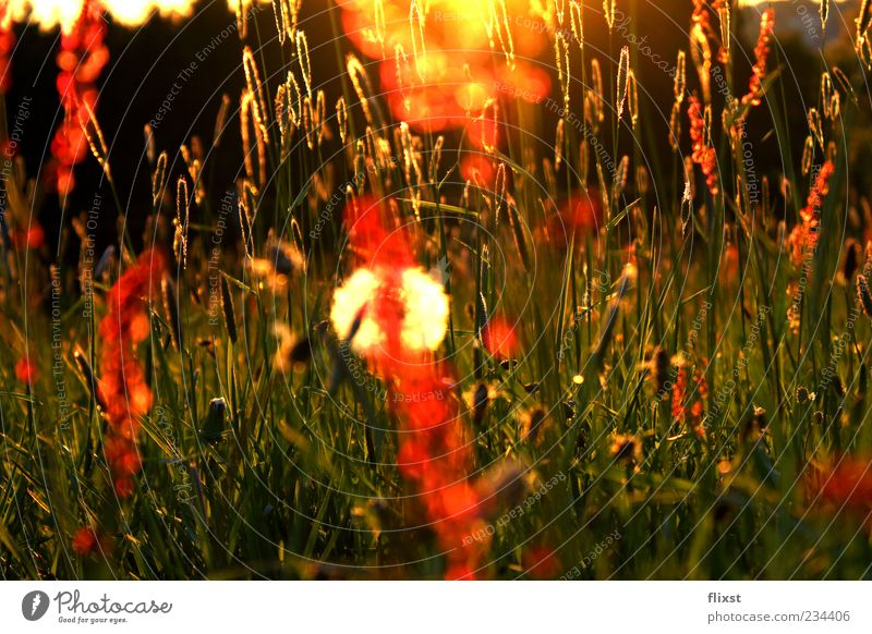 Nature Meadow Grass Blossom Contentment Hope Romance Beautiful weather Stalk Seed Optimism Spring fever Meadow flower