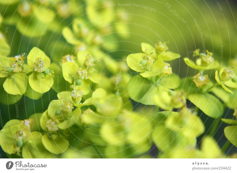 Nature Green Plant Leaf Yellow Environment Blossom Fresh Light green