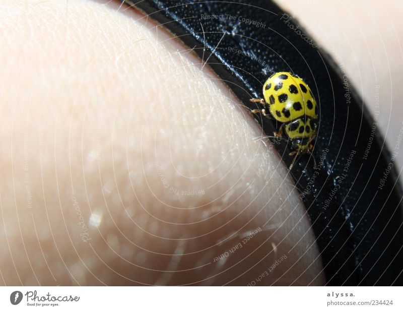Animal Black Yellow Skin Hair Beetle Leather Crawl Ladybird Bracelet