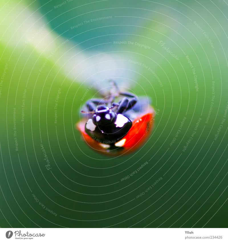 Nature Animal Calm Environment Freedom Time Wild animal Hang Beetle Crawl Ladybird Head first