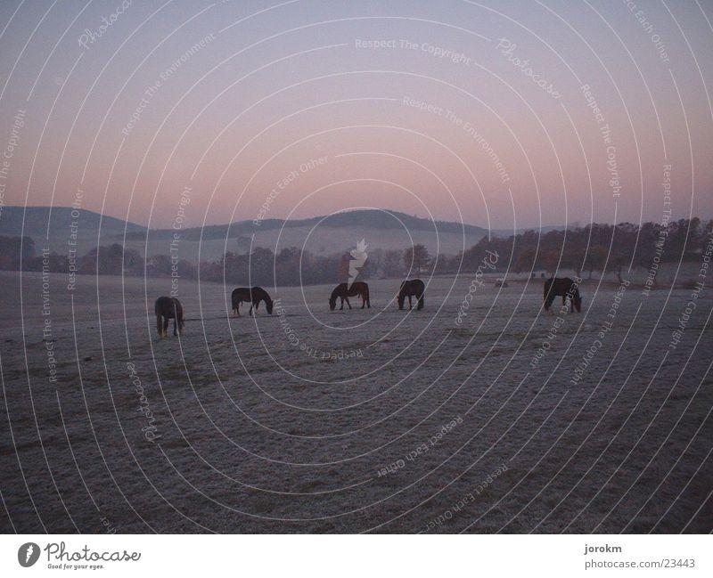 break of dawn Morning Hoar frost Horse Pasture Autumn Mountain Dawn