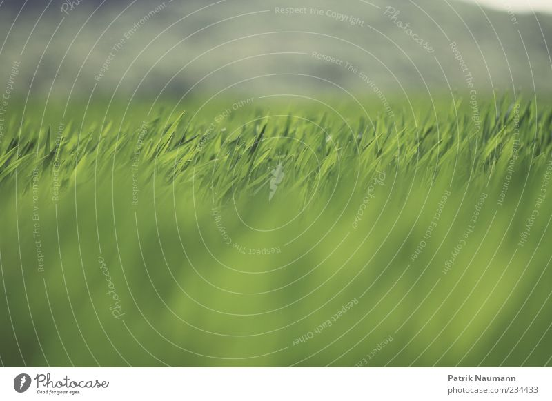 horizontal Environment Nature Spring Summer Climate Grass Meadow Esthetic Fresh Infinity Near Natural Green Contrast Deserted Shallow depth of field Field