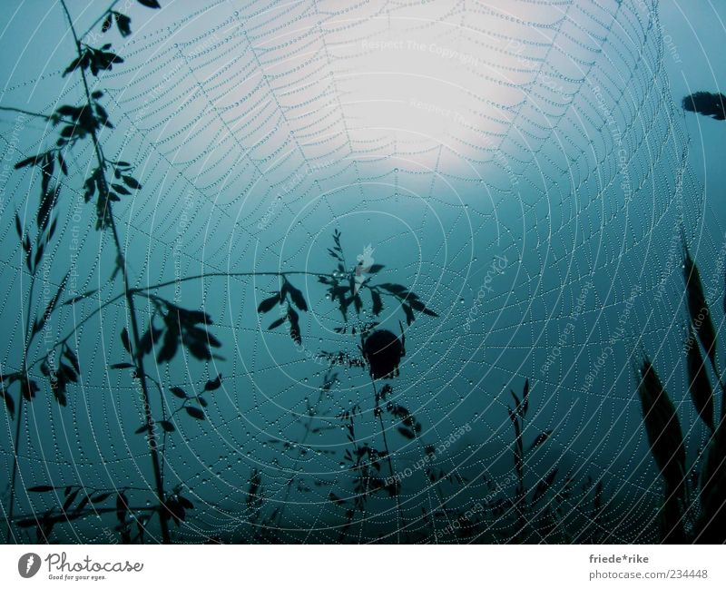 ...gone into the net Animal Wild animal Spider 1 Net Nature Network Blue Dew Wet Damp Drops of water Large Middle Spider's web Deserted Spain Way of St James