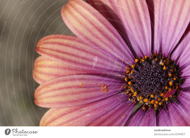 Nature Beautiful Plant Summer Flower Environment Spring Blossom Pink Violet Beautiful weather Pollen Blossom leave Pistil