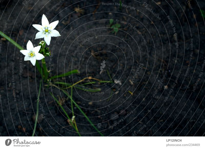 Nature White Plant Summer Flower Black Yellow Environment Spring Garden Blossom Sadness Earth Field Dirty Star (Symbol)