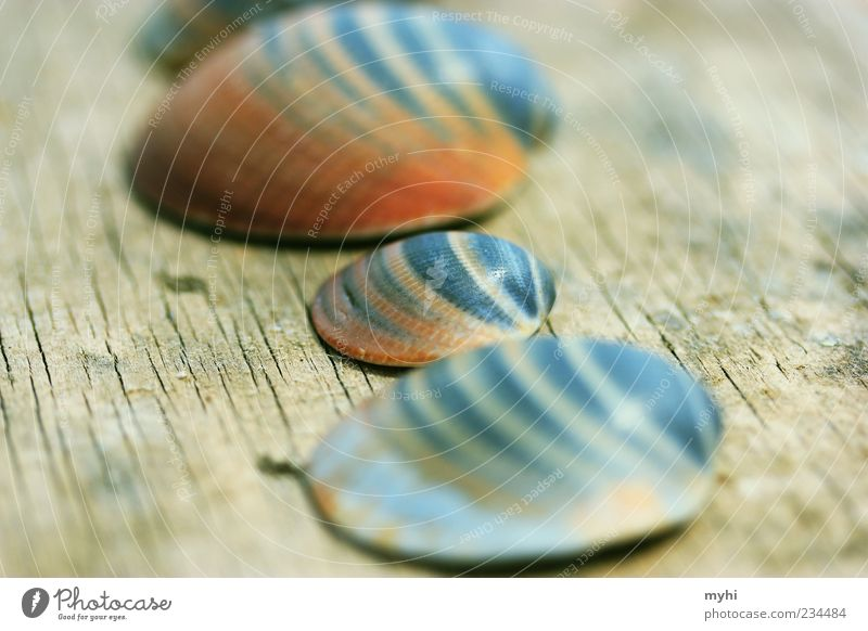 Hey, kid... Vacation & Travel Small Mussel Multicoloured Maximum aperture Colour photo Exterior shot Deserted Light Shallow depth of field Lie Size difference