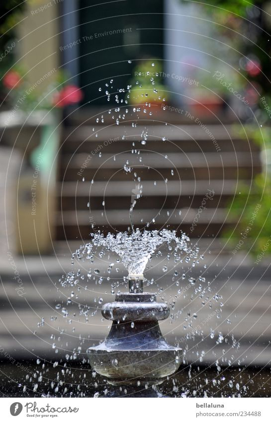 Water Beautiful Plant Flower Movement Garden Park Wet Stairs Drops of water Well Beautiful weather Entrance Inject Bubbling Fountain
