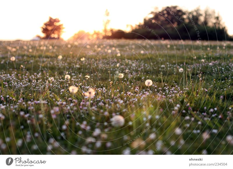 Nature Green Plant Sun Flower Life Meadow Grass Spring Blossom Park Horizon Hope Beautiful weather Peace Dandelion