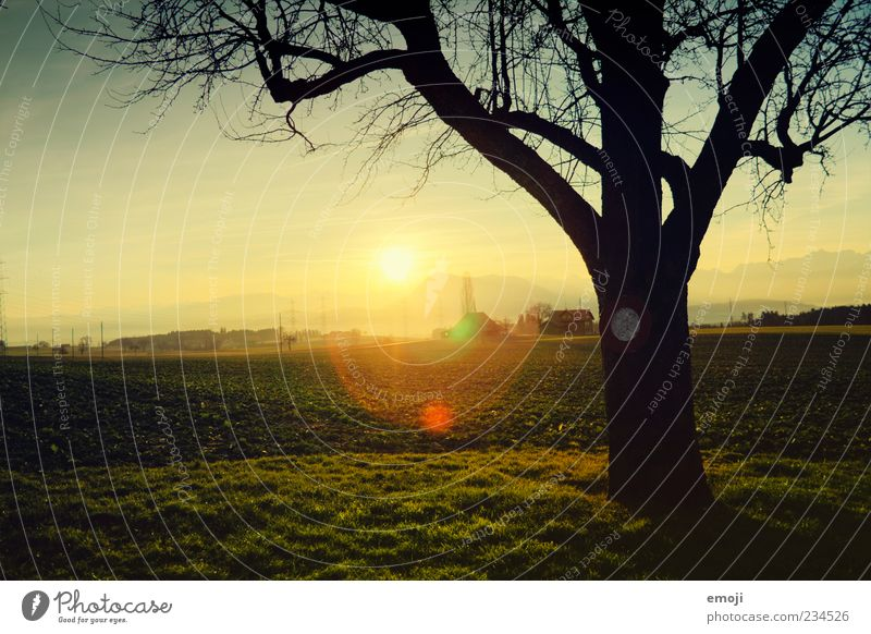 Nature Beautiful Tree Sun Summer Colour Far-off places Environment Landscape Meadow Autumn Warmth Grass Earth Field Idyll