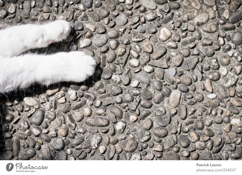 Cat White Beautiful Animal Loneliness Relaxation Legs Moody Contentment Lie Esthetic Sleep Cute Pelt Pet Paw