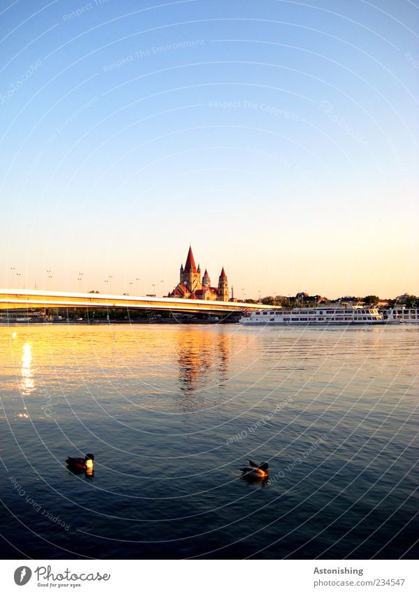 Ducks on the Danube Environment Nature Landscape Air Water Sky Cloudless sky Summer Weather Beautiful weather River Town Capital city Church Tower