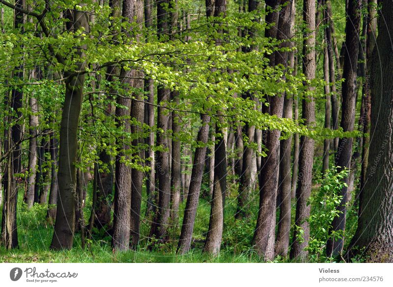 Nature Green Tree Plant Leaf Forest Environment Grass Spring Brown Tree trunk Tree bark Twigs and branches