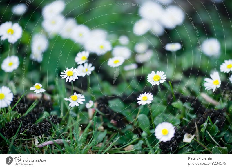 We gathered in spring Environment Nature Plant Spring Weather Flower Blossom Foliage plant Wild plant Friendliness Happiness Fresh Beautiful Original White