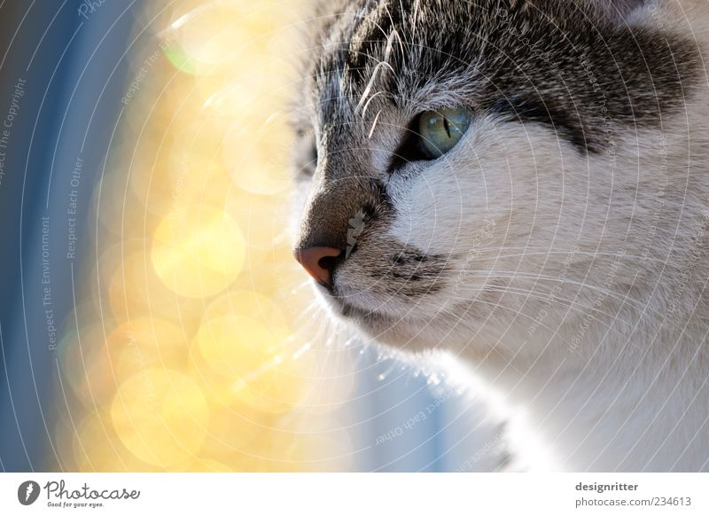 cat dream Summer Beautiful weather Animal Pet Cat Animal face Observe Looking Dream Self-confident Power Willpower Might Brave Determination Phenomenon