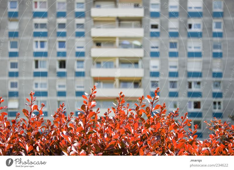 front yard Lifestyle Flat (apartment) Plant Leaf Architecture Apartment house Facade Balcony Window Town Gloomy Colour photo Exterior shot Deserted Day
