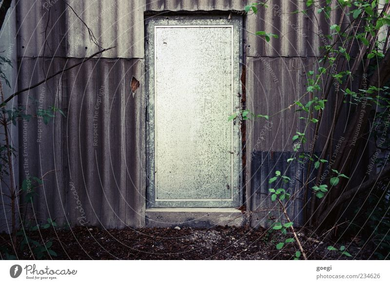Plant Leaf Metal Earth Door Facade Bushes Gloomy Mysterious Entrance Tin Eerie Industrial plant Foliage plant Twigs and branches Corrugated sheet iron