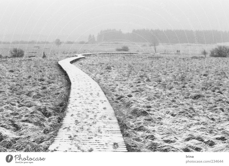 Nature Far-off places Landscape Snow Lanes & trails Fog Hiking Gloomy Analog Footbridge Haze Nature reserve Bog Black & white photo Woodway Fen