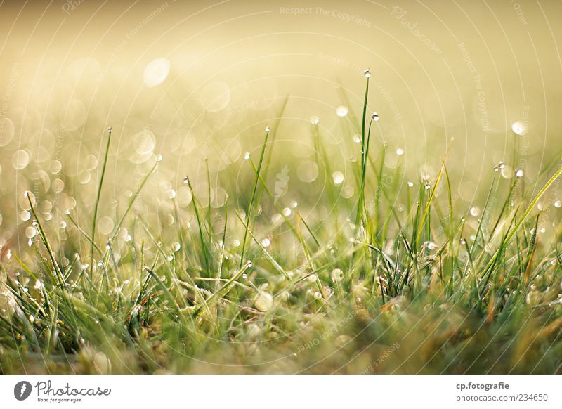 Nature Plant Sun Summer Meadow Grass Spring Wet Drops of water Growth Beautiful weather Dew Blade of grass Foliage plant Dawn