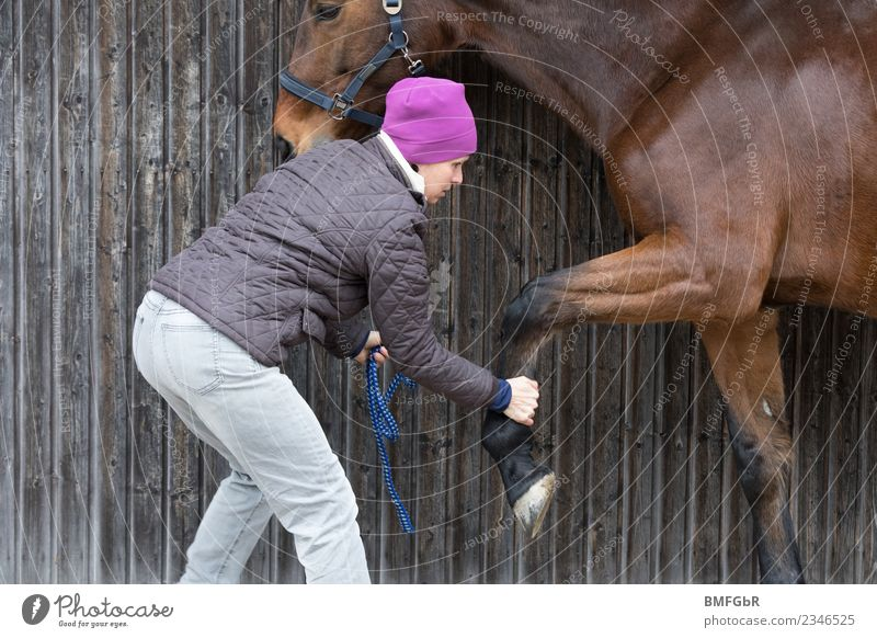 Human being Animal Healthy Adults Feminine Sports Work and employment Leisure and hobbies Power 45 - 60 years Fitness Clothing Observe Touch Horse Illness