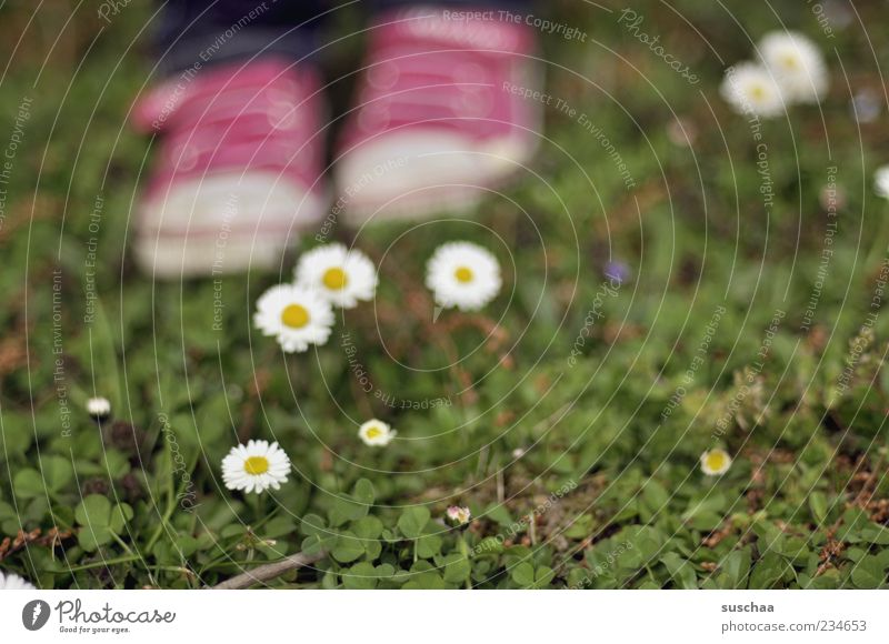 I shall or I shall not ... Nature Plant Spring Summer Grass Blossom Meadow Stand Green Pink Flower Daisy Feet Sneakers Exterior shot Day Shallow depth of field