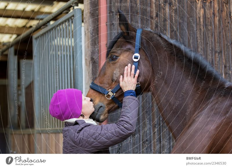 Beloved quadruped Leisure and hobbies Ride Winter Sports Equestrian sports stable Human being Feminine Woman Adults 1 30 - 45 years Cap Animal Pet Horse Touch