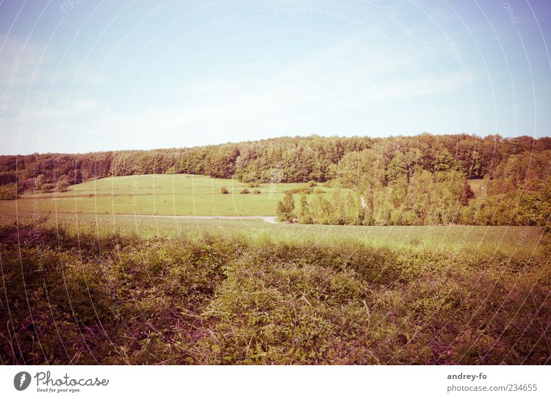 Sky Nature Blue Green Tree Summer Leaf Forest Far-off places Environment Landscape Meadow Grass Air Bright Horizon