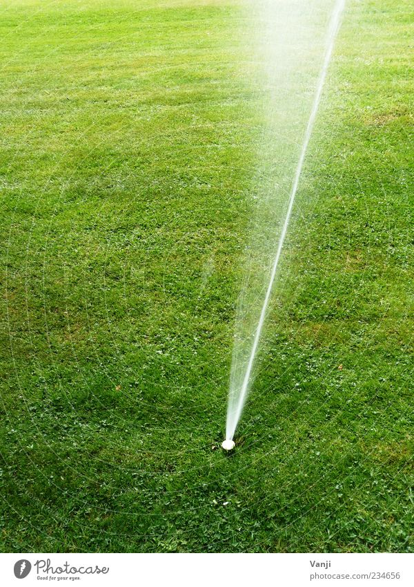 Artificial nutrition Environment Nature Grass Meadow Water Jet of water Irrigation Cast Lawn sprinkler Deserted Colour photo Exterior shot Day