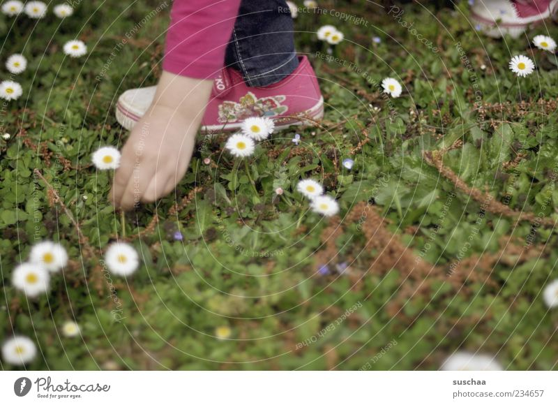 Human being Child Nature Hand Plant Girl Summer Flower Meadow Spring Blossom Feet Infancy Pink Fingers Beautiful weather