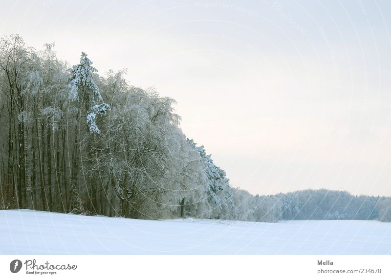 ice age Environment Nature Landscape Winter Climate Snow Tree Field Forest Bright Cold Natural Colour photo Exterior shot Deserted Copy Space right