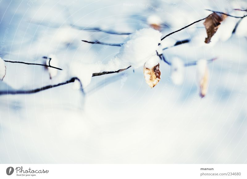 winter photo Nature Winter Ice Frost Snow Tree Leaf Twigs and branches Authentic Bright Cold Natural Beautiful Blue White Colour photo Exterior shot Deserted
