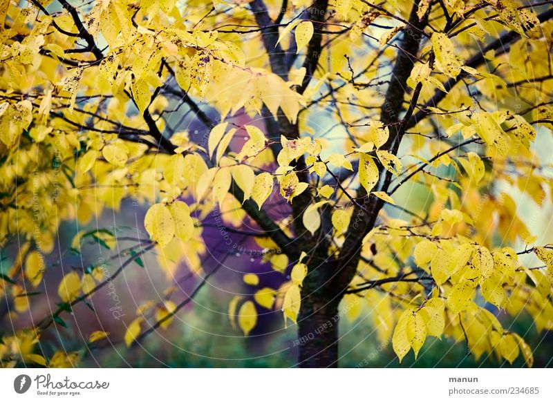 Nature Beautiful Tree Leaf Autumn Authentic Autumn leaves Autumnal Autumnal colours Early fall