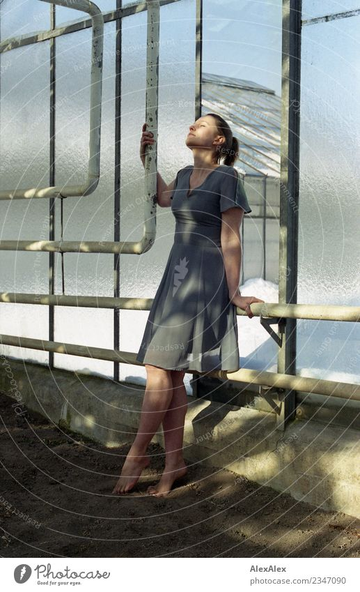 Young woman leans against glass wall in glass greenhouse Elegant Beautiful Well-being Relaxation Greenhouse Iron-pipe Youth (Young adults) Body Legs