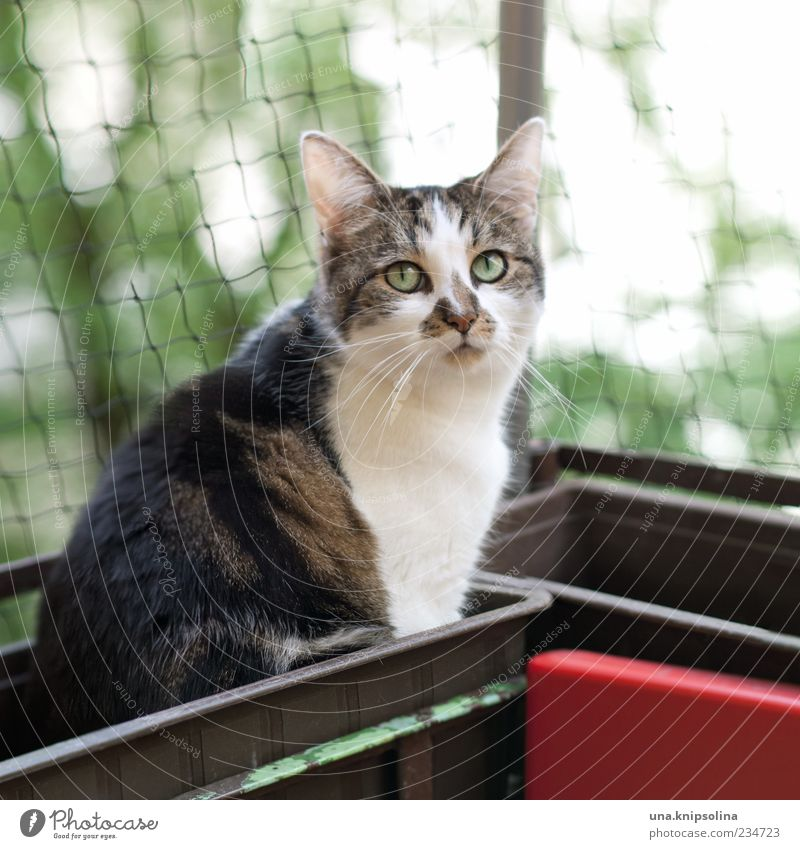 Cat Nature Tree Animal Sit Cute Observe Pelt Net Balcony Pet Domestic cat Whisker Loop Upward Window box
