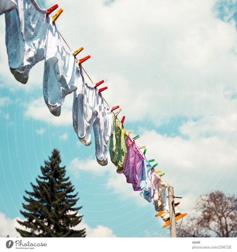 Sky Summer Clouds Wind Fresh Living or residing Clean Beautiful weather Fir tree Diagonal Fragrance Hang Laundry Underwear Dry Clothesline