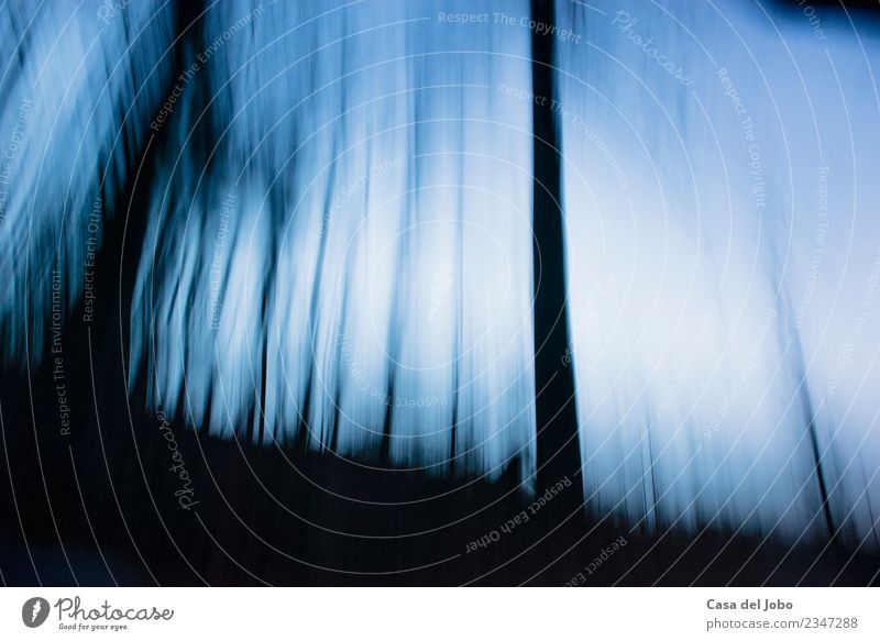 abstract trees at twilight hour Nature Plant Sky Clouds Horizon Moon Tree Forest Esthetic Cool (slang) Natural Curiosity Gloomy Soft Blue Black White Emotions