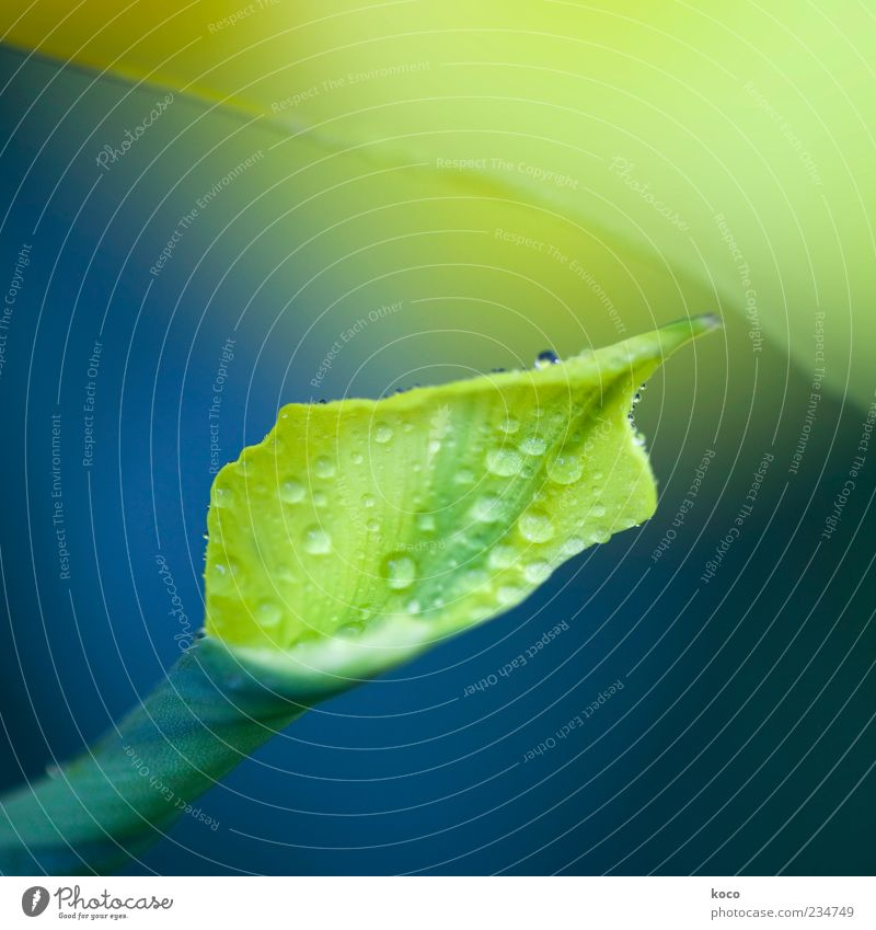 Blue Water Green Beautiful Plant Summer Leaf Yellow Life Spring Blossom Wet Exceptional Drops of water Esthetic Uniqueness