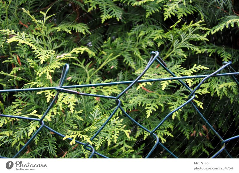 fence spit Nature Plant Foliage plant Green Fence Wire netting fence Thuja Border Neighbor's garden Garden fence Hedge Barrier Winter festival Bushes Growth