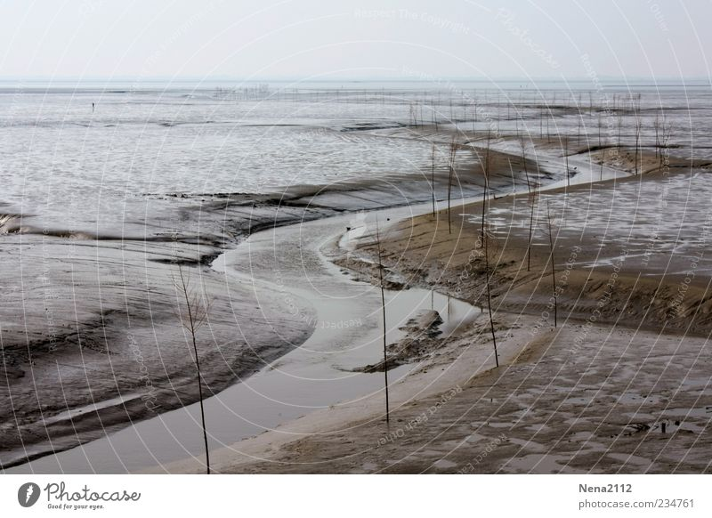 Nature Water Ocean Beach Landscape Gray Sand Coast Horizon Brown River North Sea River bank Mud flats High tide Low tide