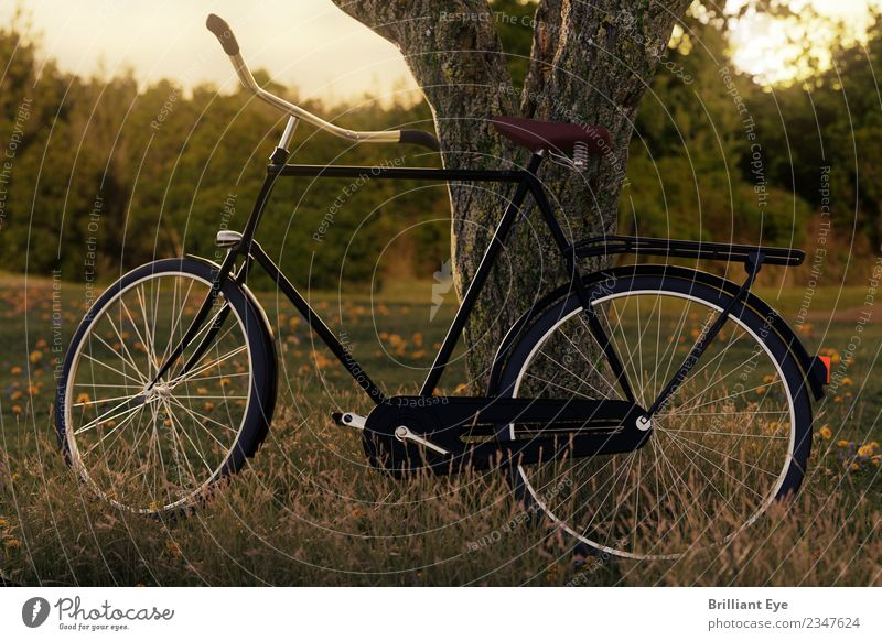 Bicycle parking Lifestyle Leisure and hobbies Vacation & Travel Trip Freedom Cycling tour Sports Nature Landscape Meadow Field Forest Simple Fantastic Athletic